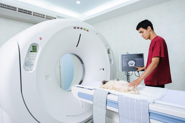 veterinarian assistant working in CT scanner room