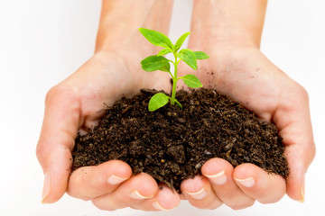 Close up of a female hands caring a young green plant