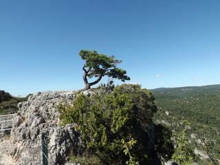 A bent, lonely tree on a rock