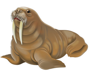 Cartoon animal - walrus - illustration for children