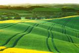 green wavy hills shined with a rising sun, Tuscany, Italy