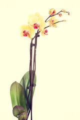 Fresh, beautiful orchid.