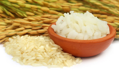Golden paddy seeds with cooked rice