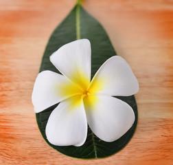 frangipani, plumeria on wood