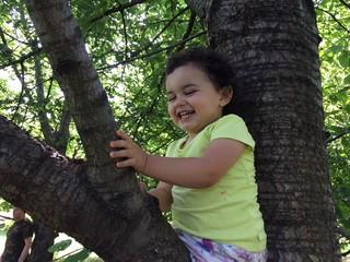 bambina sull'albero