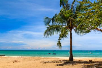Palm Tree on  Saikaew Beach