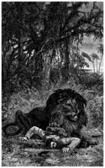 White Man : Killed by a Lion