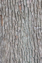 Natural bark of tree texture close - up