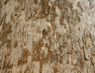 Bark Seamless Tileable Texture