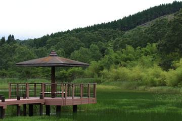 静かな湿地