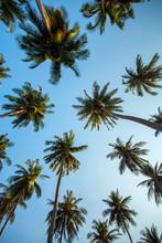 Palma drzewa przeciw błękitne niebo