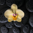 spa still life with beautiful yellow flower orchid, phalaenopsis