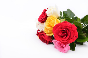 group of colorful rose