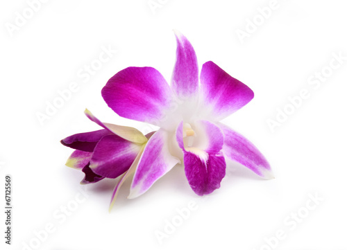 Foto op Aluminium Orchidee beautiful blooming orchid isolated
