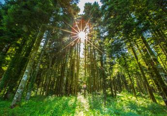 Forêt de la Joux JURA