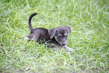 Cute Puppy in the Grass