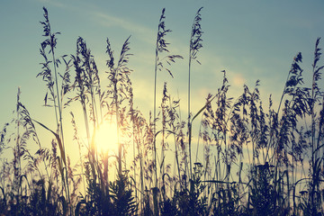 Silhouettes of grass on sunset in retro style