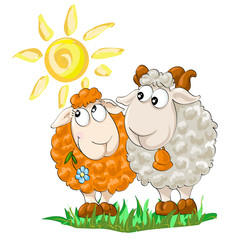 Two funny sheep on the isolated white background