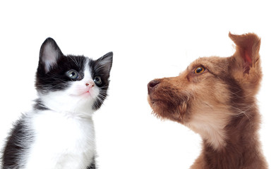 muzzle of a dog and a cat