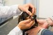 Veterinarian is looking to teeth of dog