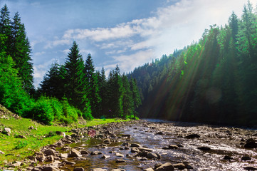 Mountain river in the forest with sunlight.