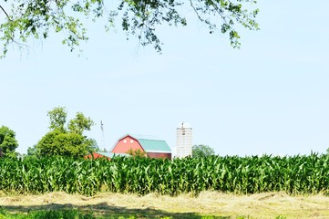 Farm over Cornfield