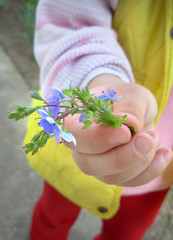 Child giving flower
