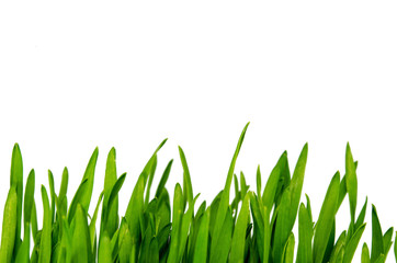 Wheatgrass isolated