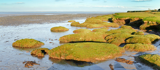 Solway firth salt marsh