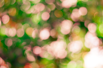 Natural forest bokeh