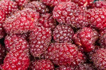 Fresh Tayberries closeup macro