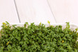 Fresh garden cress in white plastic box close-up on wooden