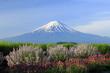 富士と5月の花