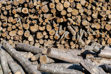 Drying Logs for Firewood