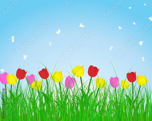 Naklejka Summer meadow background with tulips