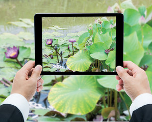 Businessman hands tablet taking pictures Pink lotus flower on th