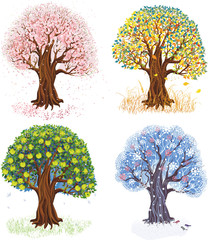 Apple tree during four seasons