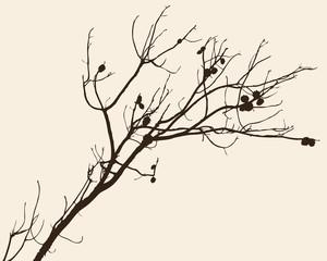 sprig of a pine tree