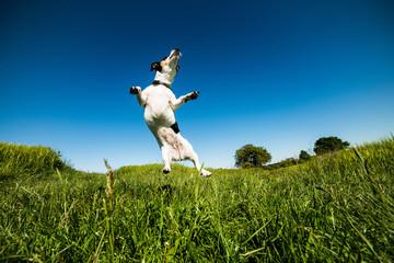 Wilma springt