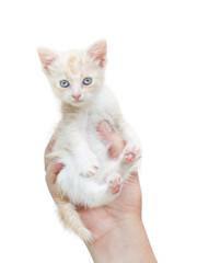 kitten in human hands