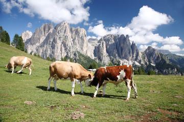 mucche al pascolo valle di fassa dolomiti
