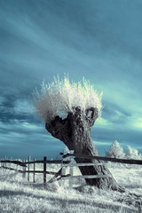 landscape in the infrared