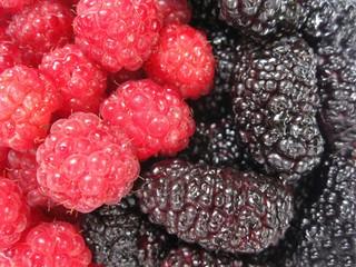 Red raspberry and dark mulberry. Yin Yang