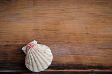 Muschel, Holztafel,Hintergrund