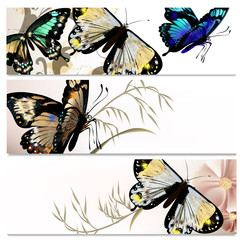 Beautiful backgrounds set with butterflies