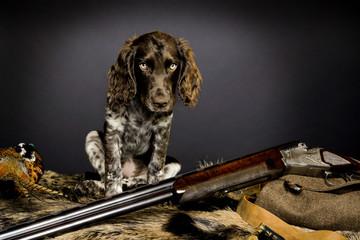 deutscher Wachtelhund Welpe 0011