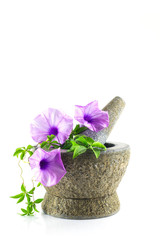 rock mortar with purple flower plant