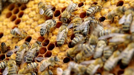 In the center of the image is hatching bees