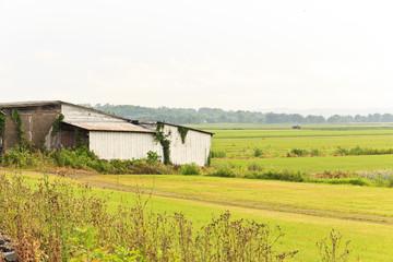 Humid Summer Day Farm