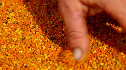 Fresh bee pollen and bee-keeper's hand